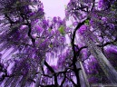 ashikaga-flower-park-wallpapers-1024x768