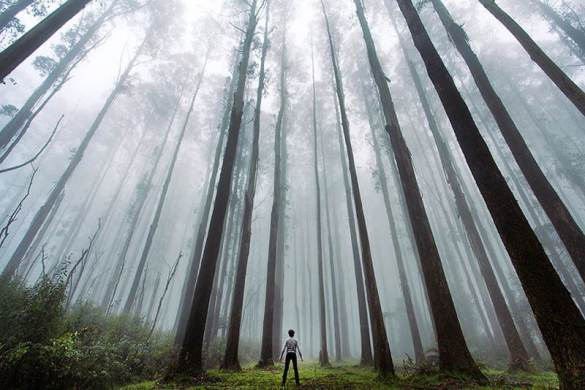 small-man-grand-nature-landscape-photography-trees