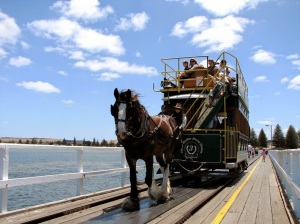 victor-harbor-horse-trams-10[6]