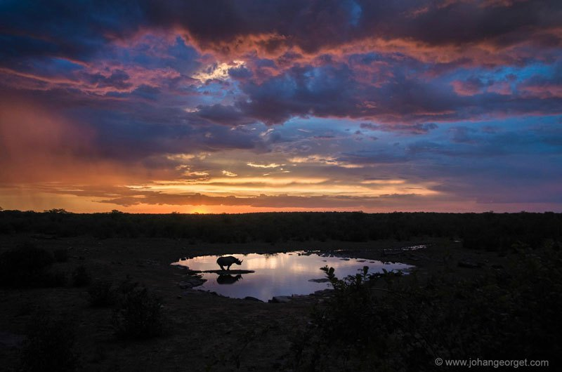 black-rhino-at-the-watering-hole-johan-georget
