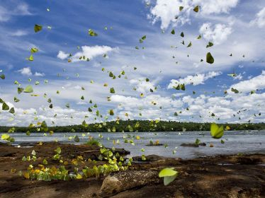 butterflies-flight-iguazu_74379_990x742