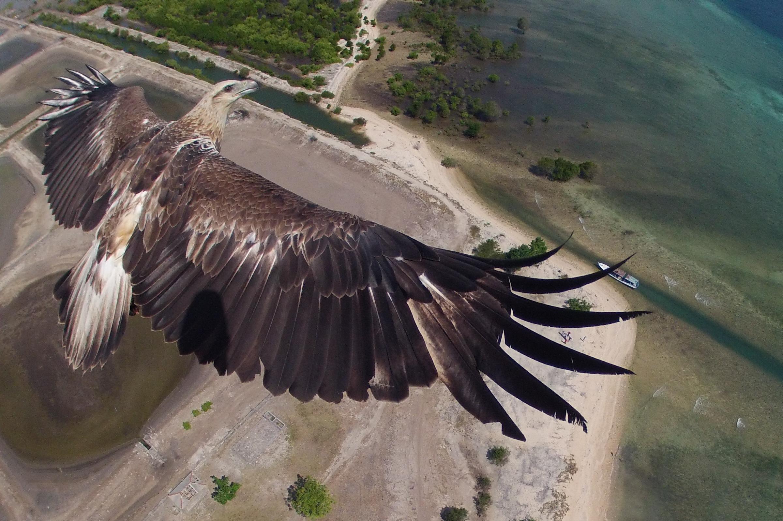 Μάντισον Σκοτ μεγάλο πουλί