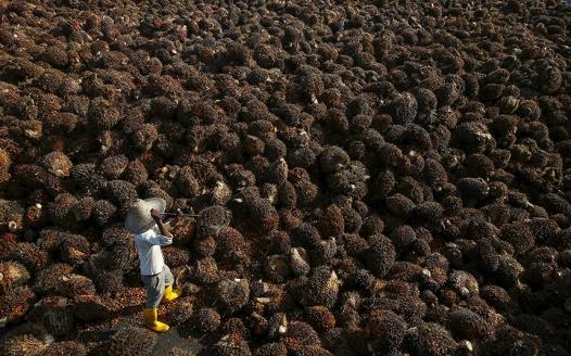 potd-palm-oil_3575082k