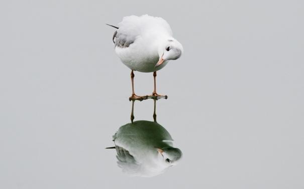 potd-seagull_3558434k