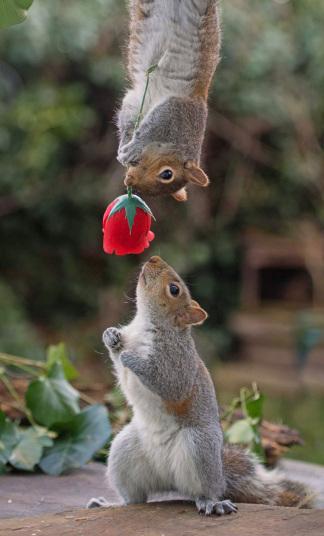 potd-squirrels_3572850k