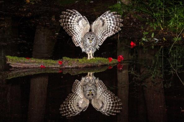potd-owl-2_3587033k