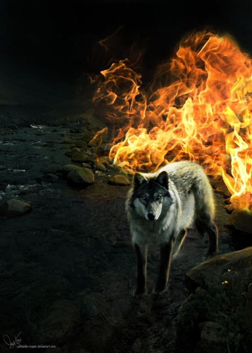wolf fire 1