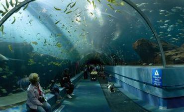 New_York_Aquarium_4634748