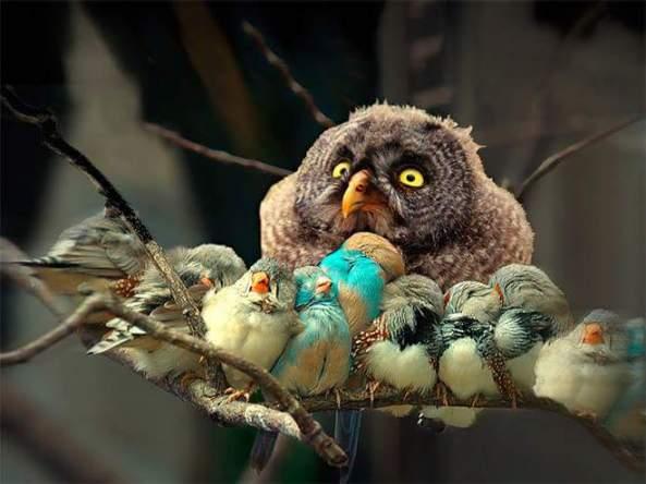 r2ark-owl