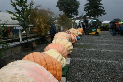 skagit-pumpkin-festival-overview