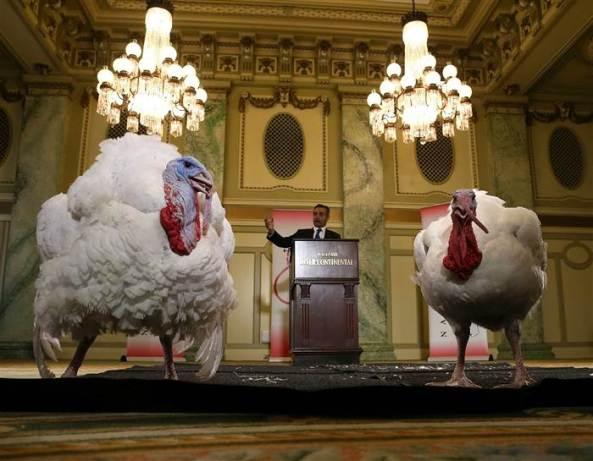 obama-turkey-pardon-today-151125-01_c3796e52785bd473c86f4bfd4bfa8c81.today-inline-large