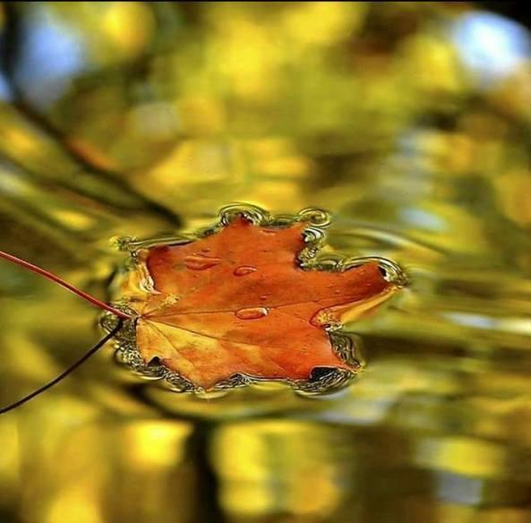 πλατανοφυλλο ήλιος λίμνη