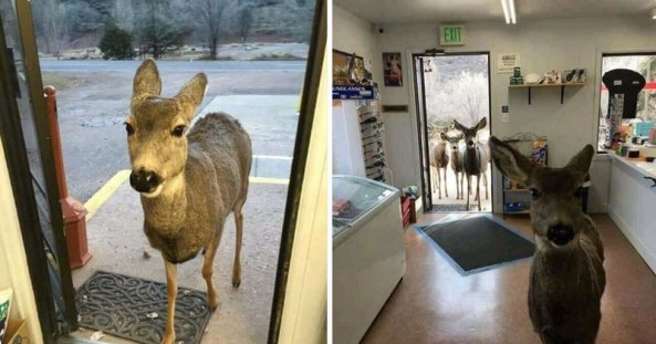deer-comes-back-to-store-with-entire-family