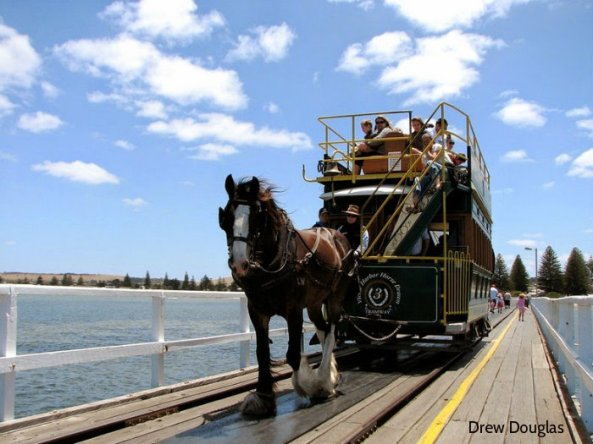 victor-harbor-horse-trams-106