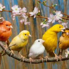 5e0c8ea4bbf19572e7b73d412966c8f8--blossoms-colourful-birds