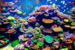 Colorful coral reef.jpg.480x0_q71_crop-scale