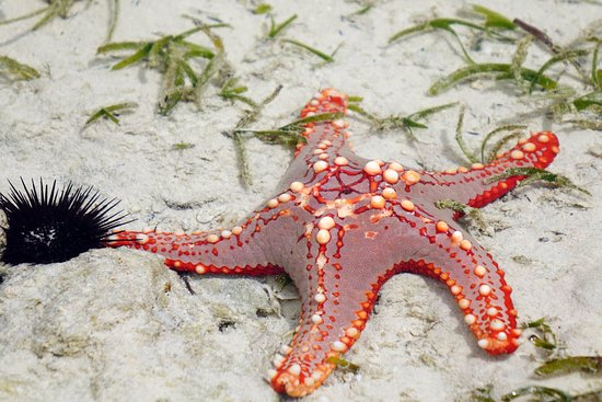 starfish-in-the-sea-during