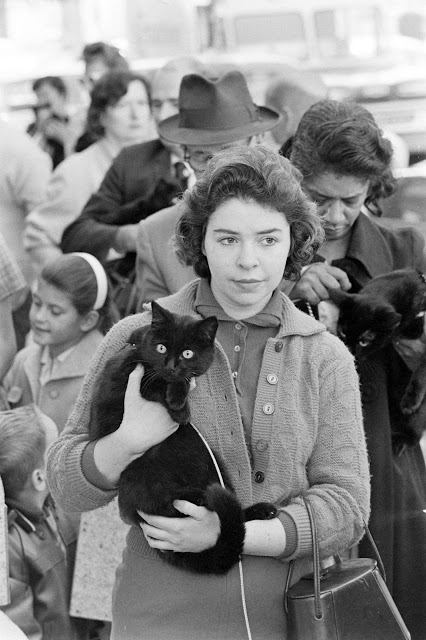 "Owners with their black cats, waiting in line for audition in movie ""Tales of Terror."""