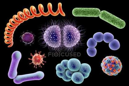 focused_160555774-stock-photo-bacteria-and-viruses-of-different
